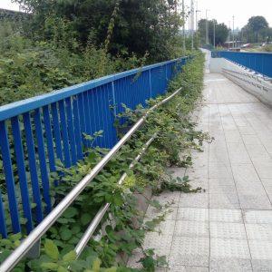 Brombeerüberwucherter Handlauf an einer Rampe am Nordbahnhof, für Gehbehinderte praktisch unbenutzbar.